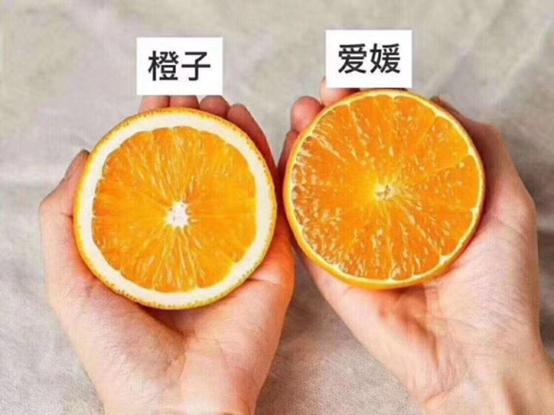 爱媛与橙子